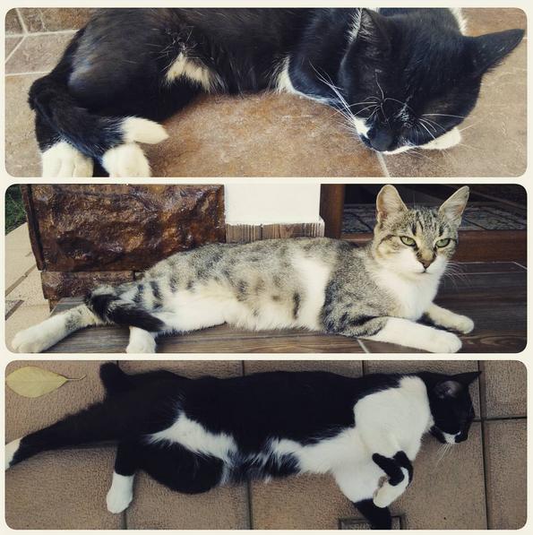 3 generatii pisici